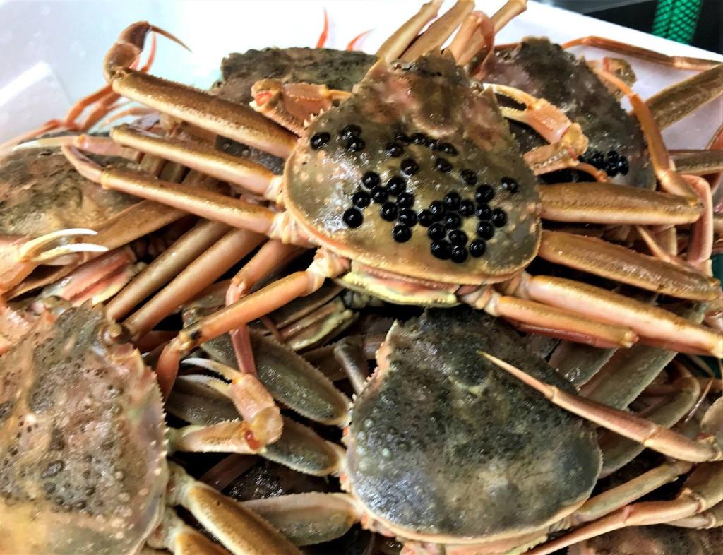 セコ蟹(兵庫県柴山港から)